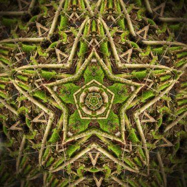 nature 13 375x375 - Natur