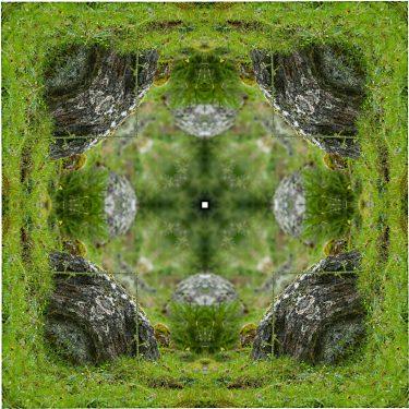 nature 16 375x375 - Natur