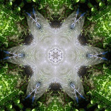 nature 22 375x375 - Natur