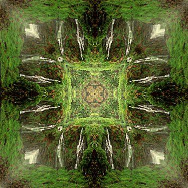 nature 37 375x375 - Natur