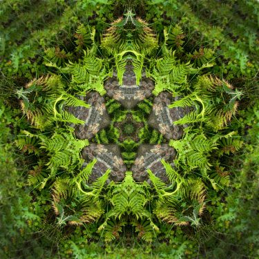 plants 11 375x375 - Pflanzen