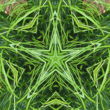 plants 15 375x375 - Pflanzen