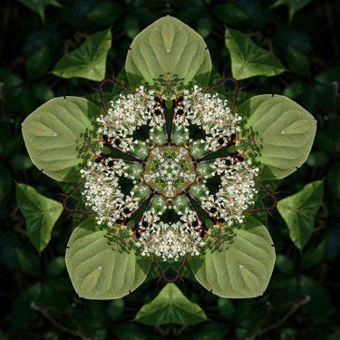 plants 17 375x375 - Pflanzen
