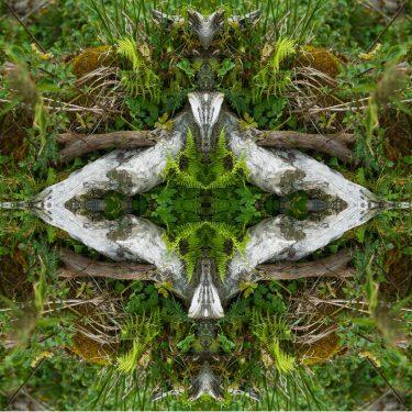 plants 20 375x375 - Pflanzen