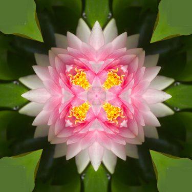 plants 27 375x375 - Pflanzen
