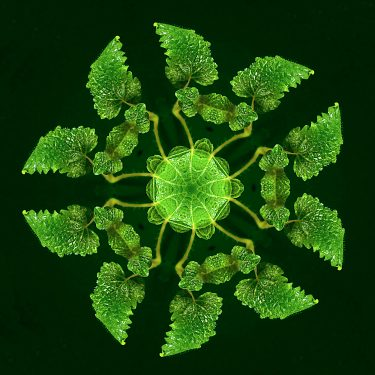 plants 29 375x375 - Pflanzen