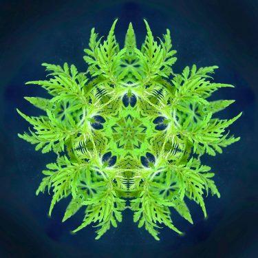 plants 3 375x375 - Pflanzen