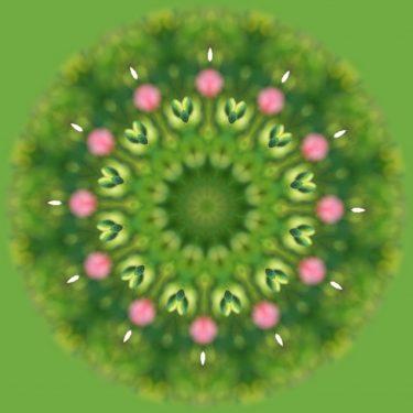 plants 30 375x375 - Pflanzen