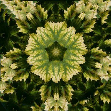 plants 36 375x375 - Pflanzen