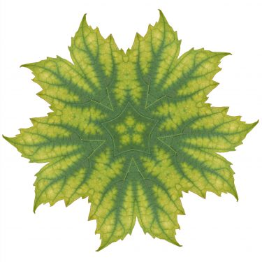 plants 39 375x375 - Pflanzen