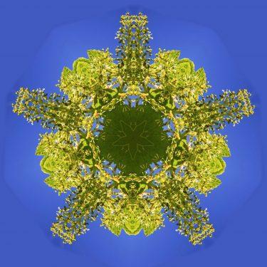 plants 6 375x375 - Pflanzen