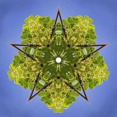 plants 7 375x375 - Pflanzen