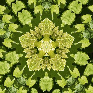 plants 8 375x375 - Pflanzen
